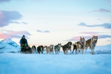 Win a weekend dog sledding in Norway