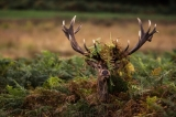 Wildlife Photography Competition: Win a photography trip to Slovenia