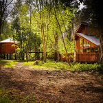 Win Forest Holidays