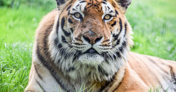 Win Zoo Family Day Out