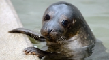 Win a VIP experience at the Cornish Seal Sanctuary