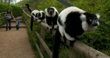 Win Family Ticket To Dudley Zoo