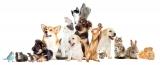 Win Pet a £50 Pets at Home Voucher!