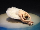 WIN: Tickets to see Swan Lake at Weston's Playhouse Theatre