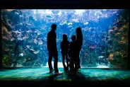 Win a family ticket to The Deep aquarium, Hull
