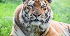 Win a family day out at Noah's Zoo Farm, Bristol