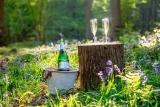 Win a wine-tasting break in East Sussex